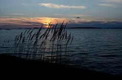 Sunset siluet (tonibjörkman) Tags: hanko siluet 2017 sea balticsea nikon autumn finland suomi luonto nature kuva nikkor syksy ilta