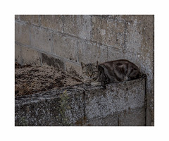 Planqué .. (hélène chantemerle) Tags: murs chat gris walls cat grey stashed liubolin