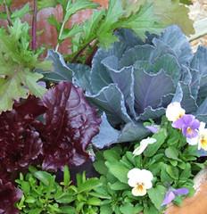 Vegetable garden (msuanrc) Tags: garden vegetables veggies gardenvegetables
