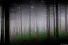 Verdes y Grises (juan luis olaeta) Tags: landscape natura paisages bosque forest photoshop lightroom canoneos60d sigma1020 fog brumas brilliance laiñoa art arte panoramicas