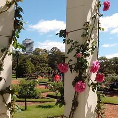 Se acerca la primavera (K.B.L. Luccia ( Por ahora off )) Tags: rosas barriodepalermo ciudaddebuenosaires argentina jardines