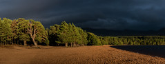 Unexpected Light (Peter Quinn1) Tags: lockmorlich evening cairngorms highlands glenmore glenmoreforestpark goldenhour beach loch pines scotland darkclouds scotspine