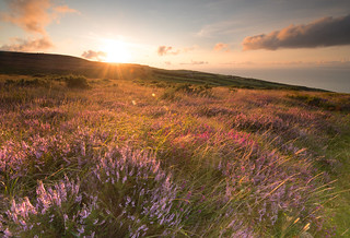 Golden Sunset over hills of heather