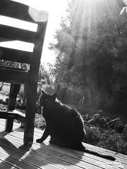 P1390450 (Christen Ann Photography) Tags: 2016 animals carterton cat christmasholidays december2016 newzealand wairarapa