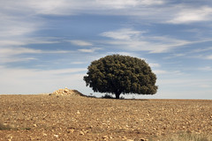 IMG_0683 Lovely (jaro-es) Tags: nature natura natur naturewatcher naturemaster naturesfinest canon españa eos70d spanien spain spanelsko landschaft landscape sky himmel strom baum arbol tree