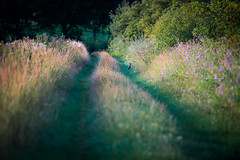 Rabbit Lane (Ingeborg Ruyken) Tags: dropbox zonsopkomst sunrise juli dawn konijn zomer floodplain flickr ochtend morning summer riverforeland empel rabbit july natuurfotografie 500pxs 2017 maasuiterwaarden