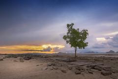 Survivor (E&R Clikz - Away !) Tags: beach lone survivor blue sunset sky krabi thailand tree dusk calmness unique green nature landscape dslr nikon d7200 nikorr wideangle colors catchy photographer dazzling world