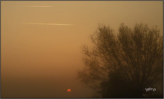 Over The Top. (Picture post.) Tags: sunrise mist willow contrails summer morning brume sun trees silhouettes