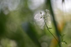 La esencia de la nada. (Nina Scotta) Tags: puente calma sosiego silencio serenidad luz sombra verde primavera niebla bokeh macro