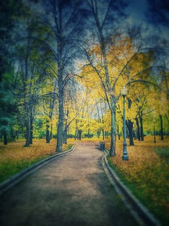 Autumn in Moscow park