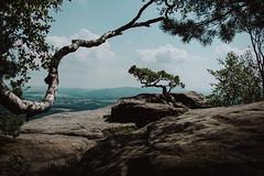 favorite place   l   2017 (weddelbrooklyn) Tags: sächsischeschweiz elbsandsteingebirge lilienstein natur landschaft berge baum bäume aussicht nikon d5200 sachsen saxon saxonswiss mountains sandstone nature landscapes tree trees view