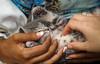 IMG_2535 (kz1000ps) Tags: boston massachusetts bostoncommon common park cats kitties kittens felines caturday purr catcafe brighton humane society adoptions