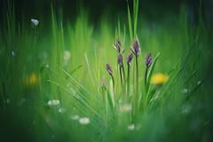 welcome to the jungle (christian mu) Tags: flowers bokeh nature spring germany muenster münster botanicalgarden botanischergarten christianmu schlossgarten zeiss sony sonya7ii 85mm 8518 batis batis8518