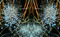 la richesse de la nature (Renate S.) Tags: tautropfen dewdrops glitter art digitalart photomanipulation digital nature light artdigital yourbestoftoday flickrexploreme