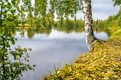 Autumn in Skellefteå (AdamTje) Tags: tamron1750 tamron nikon d7100 cloudy water sweden outdoors scandinavia lake autumn lightroom birch