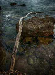 Varada en las Rocas (candi...) Tags: tronco rama mar rocas agua airelibre naturaleza nature sonya77