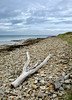 Driftwood on the beach at Lindisfarne. (johncheckley) Tags: d90 beach driftwood