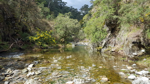 Panorama of the river on the Mt Beauty Gorge walk (1/5)