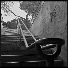 Sottopassaggio pedonale (Moro972) Tags: railing ringhiera albero tree draw disegno graffity muro wall border italia italy 6 iphone square scuro dark noir bw black white nero bianco stairs pedestrian subway scala pedonale sottopassaggio
