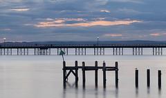 Evening Light (loraine.french57) Tags: southend southendonsea estuary pier sky evening pink clouds lampost water longexposure birds seagulls