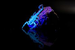 Scorpion Under UV Blacklight (Tydence) Tags: arizona bark scorpion tail raised rock glass studio blacklight black light glow green brown stone sony minolta a7 af 100 300 telephoto