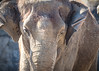 Tierpark Berlin (Zarner01) Tags: porträt tiere tiger elefanten tierpark berlin zoo deutschland germany tier canon eos 750d giraffe schloss statue katze raubtier 55250 is stm efs