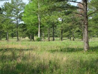 Alabama Luxury Whitetail Hunt 8