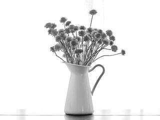Las ultimas flores del verano
