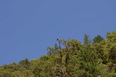 Rafting Down The Rogue (lillian_bixler) Tags: rogue river rafting kayak raft galice resort oregon bald eagle