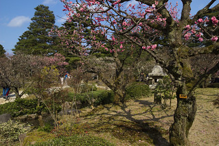 兼六園、金沢 (Kenroku-en, Kanazawa)