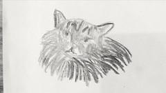Cat (Luis Piedras) Tags: art arte draw dibujo cat gato charcoal carboncillo