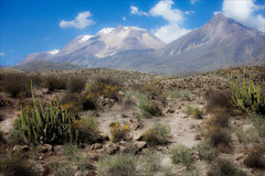 Leaving the Altiplano (kate willmer) Tags: mountains clouds scrub altitude altiplano peru cactus