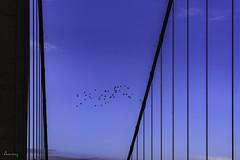 I ❤ blue (ancoay) Tags: provence avignon sky bridge puente cielo blue azul frança francia france 7dwf lineas lines birds smileonsaturday bluetiful