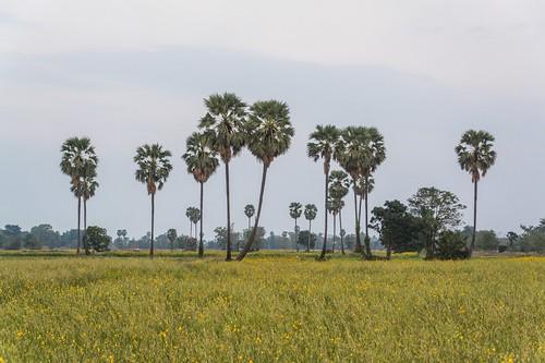 ramkhamhaeng national park - thailande 58