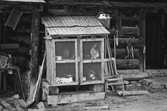 Anglų lietuvių žodynas. Žodis rabbit-hutch reiškia n narvas triušiams; rabbit- punch n smūgis delno briauna (į sprandą) lietuviškai.