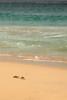 Boa Vista (CMM_456) Tags: boavista beach shore sand crab ghostcrab canon5dmkii 70200 f4l