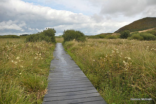 Fenor Bog Boardwalk.