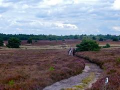 Moorlands (Frans Schmit) Tags: heidevelden heaths moor moorlands vierhouten fietstocht fransschmit