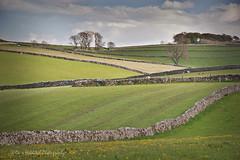 Contemplation (Dave Hilditch Photography) Tags: derbyshire landscapes walls stonewalls fields nature grass