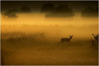 Sonnenaufgang im Ochsenmoor