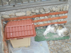 147 (en-ri) Tags: gatta randagia stray cat cuccia pregnant incinta verde sony sonysti casetta