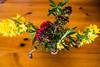 20170801 Switzerland 07190 -1 (R H Kamen) Tags: stilllife switzerland valdebagnes valaiscanton verbier flower highangleview rhkamen summer valais