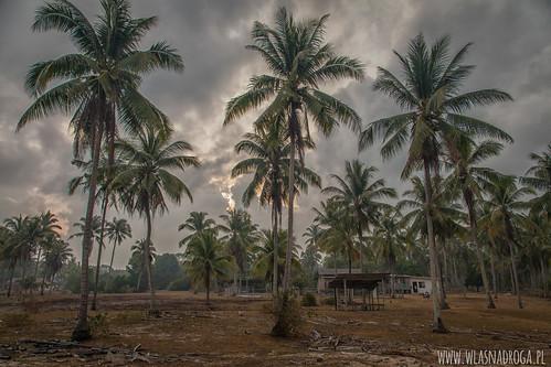 Palmowy kraj