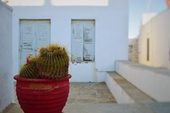 Day 225 : Is for ... The Backyard Cactus (Storyteller.....) Tags: 365 deep365 cactus backyard home house red windows door white green island nikon blue buildings architecture