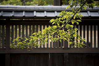Daikaku-ji and Osawa Pond 大覚寺と大沢池