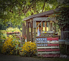 Flowers & Flag (mgstanton) Tags: farm millis nature tangerini flag flowers americana porch on1