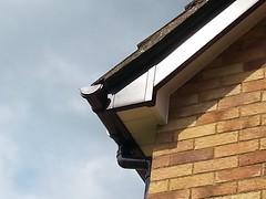 Roofline, Fascia, Sofit, northampton, milton keynes, bedford5 (prestige for your home) Tags: roofline fascia soffit northamptonshire bedfordshire buckinghamshire
