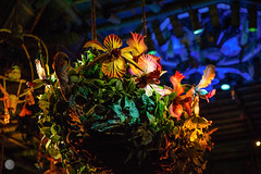 The Flowers Croon (Mr__Twitchy) Tags: adventureland anaheim disneyland disneylandresort enchantedtikiroom indianajones junglecruise orangecounty southerncalifornia themepark tourism travel waltdisney california unitedstates