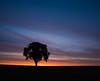 Morning flight (grbush) Tags: tree lonetree minimalism minimalist silhouette morning sunrise dawn daybreak bedfordshire birds countryside rural england sonya7 samyang14mmf28ifedumc sony samyang nature floraandfauna clouds sky