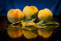 Fresh Peaches (brucetopher) Tags: peach peaches yellow fresh freshfruit fruit orange ripe ripen leaves leaf blue macro stilllife still life food garden fall harvest